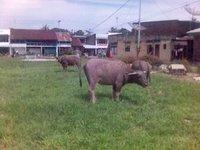 Sebuah pojok di lapangan bola Sarimatondang