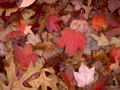 Fall Leaves in December