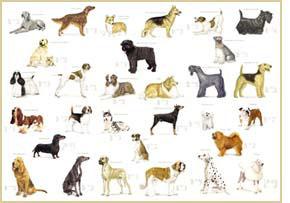 Large Dog Breeds Pictures Unique Dog Breeds Dog Breeds ...