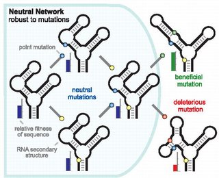 A Neutral Network of Four RNA Secondary Structures, with One Member Connected to Two Sequences outside the Network, One with Lower, and One with Higher Fitness