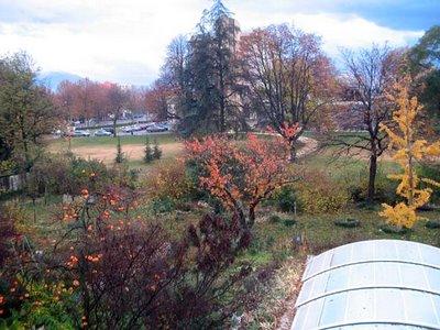 Jardin otoñal: el caqui en primer término