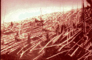 Trees supposedly felled by the Tunguska blast. Photograph from Kuliks 1927 expedition