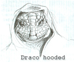 Alien Hooded Drago