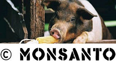 Genetically Modified organisms are safe. Right!