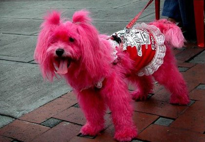 Pinky Dog