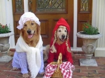 Funny Dog carnival