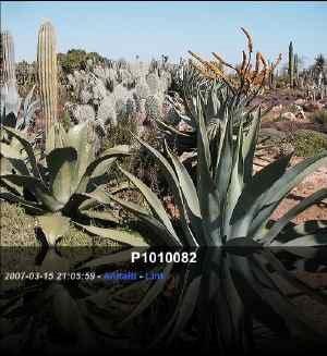 Botanicactus, Mallorca