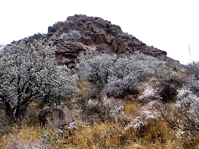 Organ Mountains - Snow
