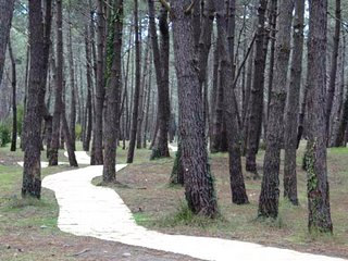 Bosque gallego