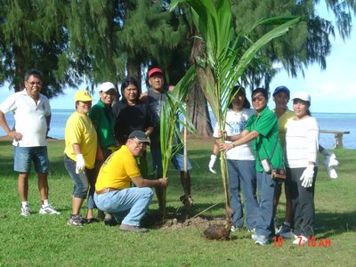 Saipan Coconut Planting
