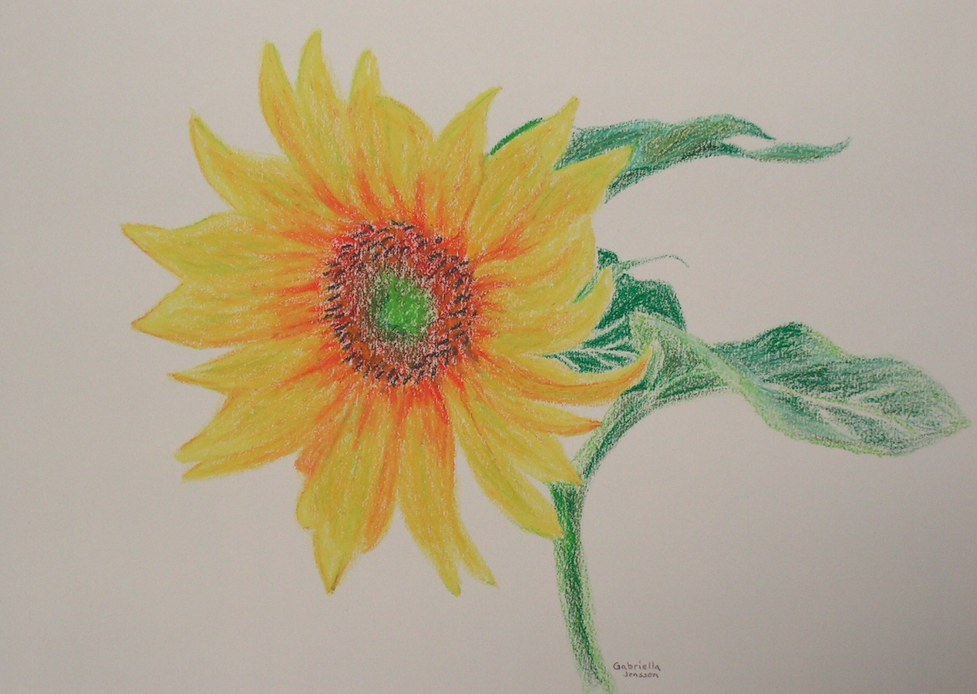 daily artwork gallery sunflower oil pastel