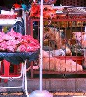 cachorros num mercado sul coreano. note que alguns deles já estão mortos.