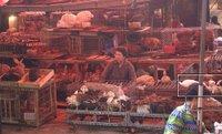 Uma foto extremamente rara. Aqui ve-se cachorros, gatos, passaros, coelhos. Todos a venda para abate. Fotos em locais assim são proibidas. Vejam os quadrados marcados.
