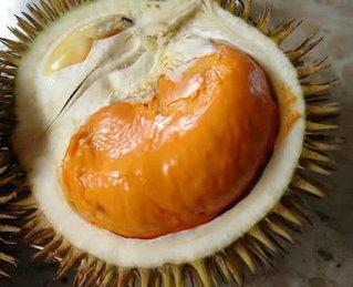 foto de um durian aberto. O cheiro é horrível, pela cara dele, você conseguiria comer?