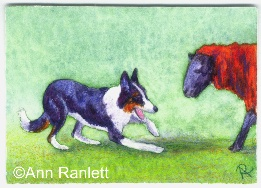 Hey Ewe - ACEO by Ann Ranlett
