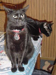 Oh, kittens!