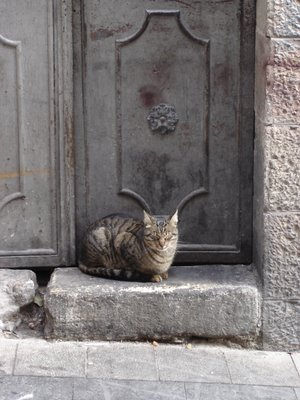 Jerusalem watch-cat on duty