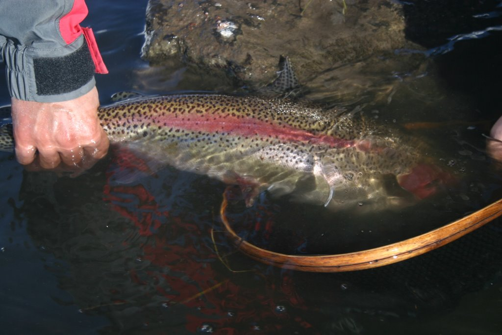 Fly currents fishing report and news fly fishing in for Yampa river fishing report