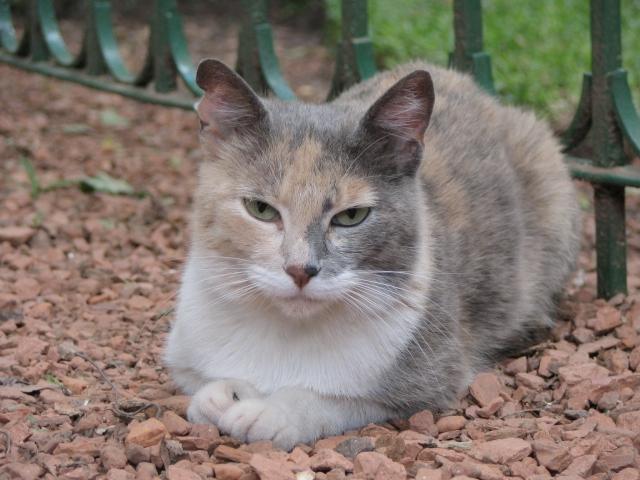 Gatos garabatos gatos del jard n bot nico for Ahuyentar los gatos del jardin