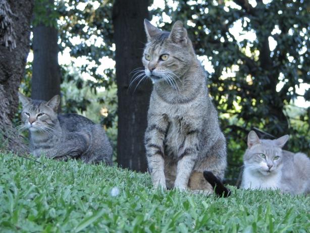 Gatos garabatos gatos del jard n bot nico for Ahuyentar gatos jardin