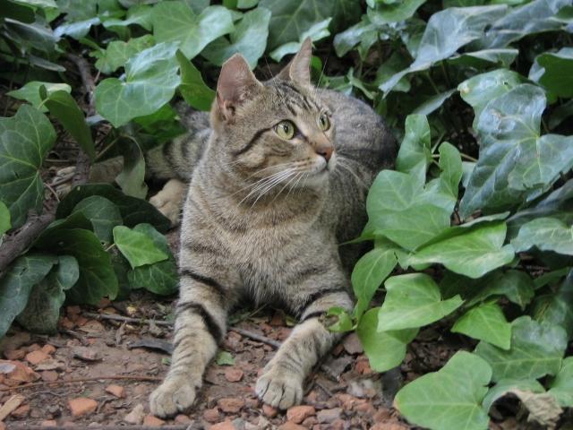 Gatos garabatos gatos del jard n bot nico for Alejar gatos del jardin