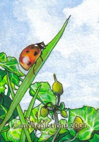 Naj's Ladybird at Rest ACEO - Tradeable Art Card
