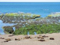 Peninsula Valdes: Seehunde und Seeelefanten beim Sonnenbad