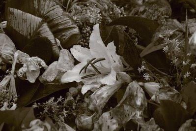 fleurs, cimetière, photo dominique houcmant, goldo graphisme