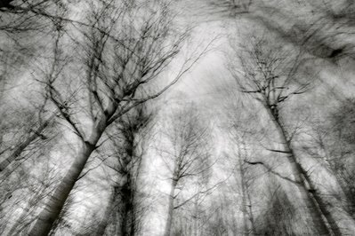 courir dans les bois, photo d'arbres, trees photo, foto, arboles, copyright dominique houcmant, Goldo