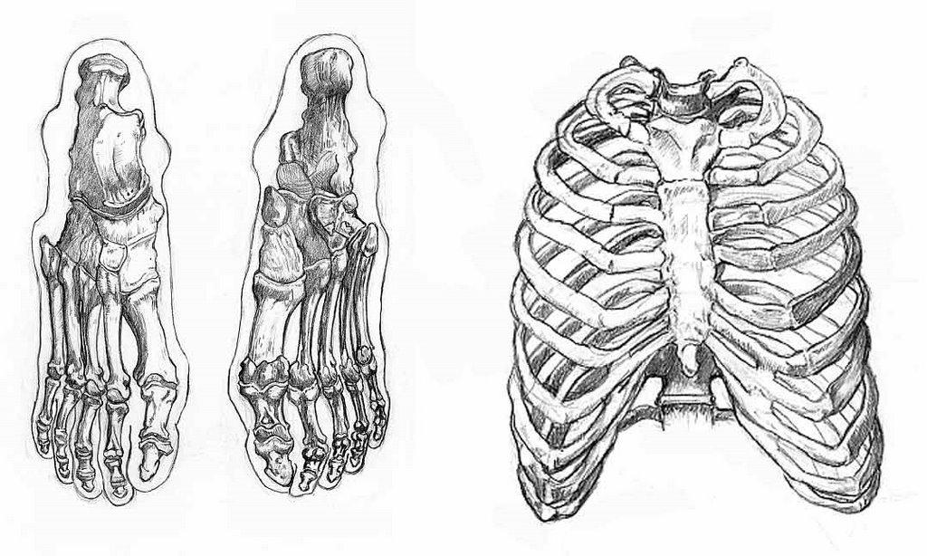 Perfecto Los Huesos Del Tórax Anatomía Friso - Imágenes de Anatomía ...