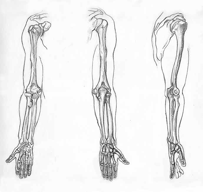 El Rincón de Montse Akane: Lección de Anatomía