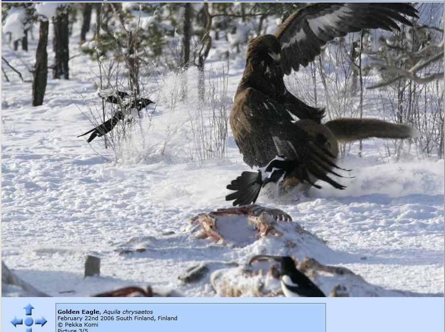 http://photos1.blogger.com/x/blogger/8094/2150/1600/489082/Eagle%20and%20Fox%203.jpg