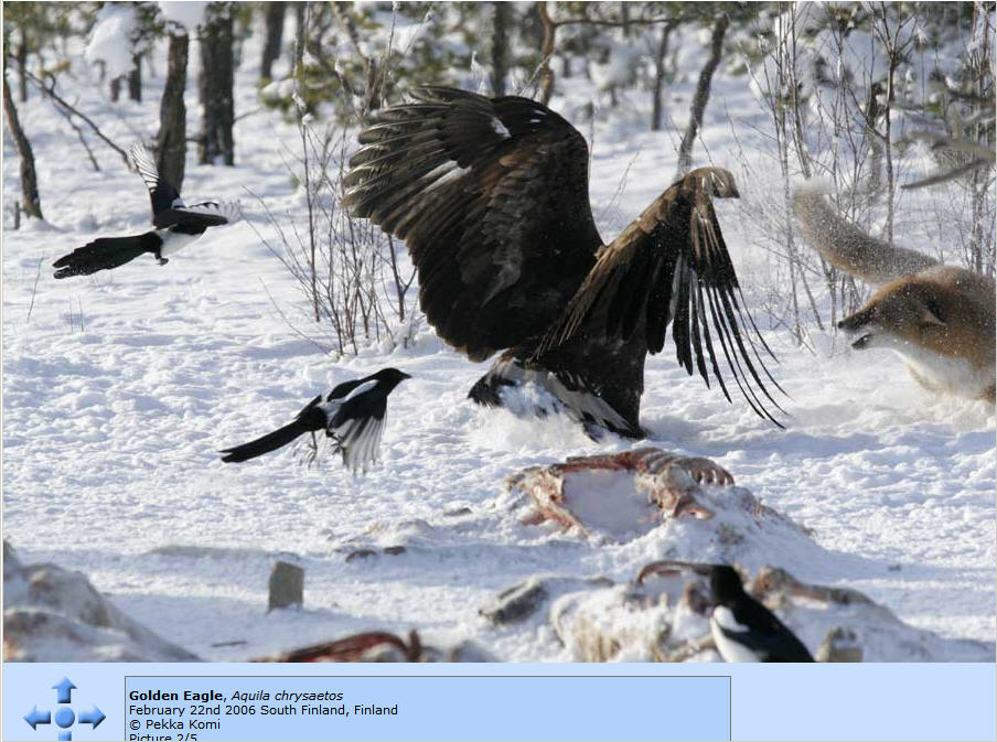 http://photos1.blogger.com/x/blogger/8094/2150/1600/665473/Eagle%20and%20Fox%202.jpg