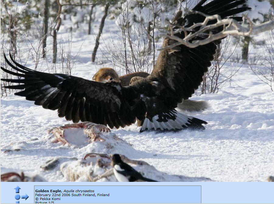 http://photos1.blogger.com/x/blogger/8094/2150/1600/936323/Eagle%20and%20Fox%201.jpg