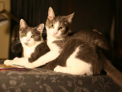 Spackle and Crackle, our cats, on my synthesizer which I never ever use