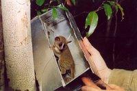 lemur primate trap