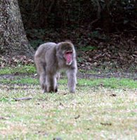goldsboro monkey loose