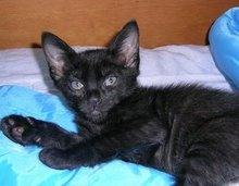 Melchior - Adoptado pela Eduarda!