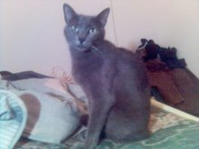 Jaspe Grey - Adptada pelo Ricardo!!!