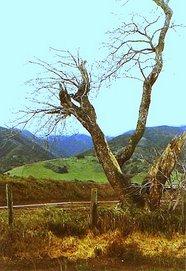 Santa Lucia Hills, Monterey County