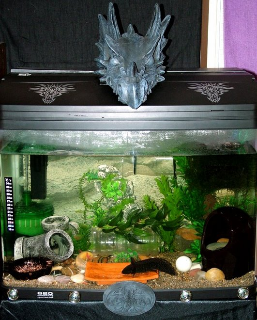 Dragon's Home (Tank)