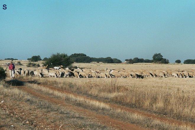 vrijdag 05: kudde: el pastor con su rebano