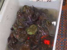 Chinatown Frogs