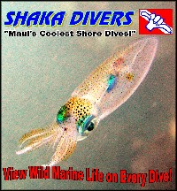View Wild Marine Life on Every Dive!