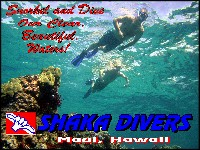 Dive Our Clear Tropical Waters!