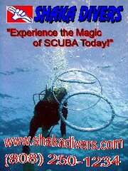 Experience the Magic of SCUBA Today!