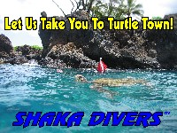 We Take You To Turtle Town!
