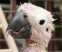 Hello!  I am Bibbie.  :-)