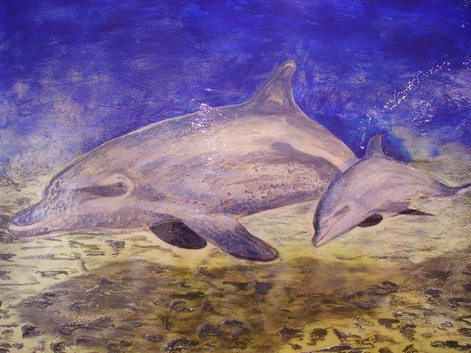 Golfinhos - Disponível