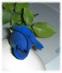 Rosas azuis as minhas favoritas